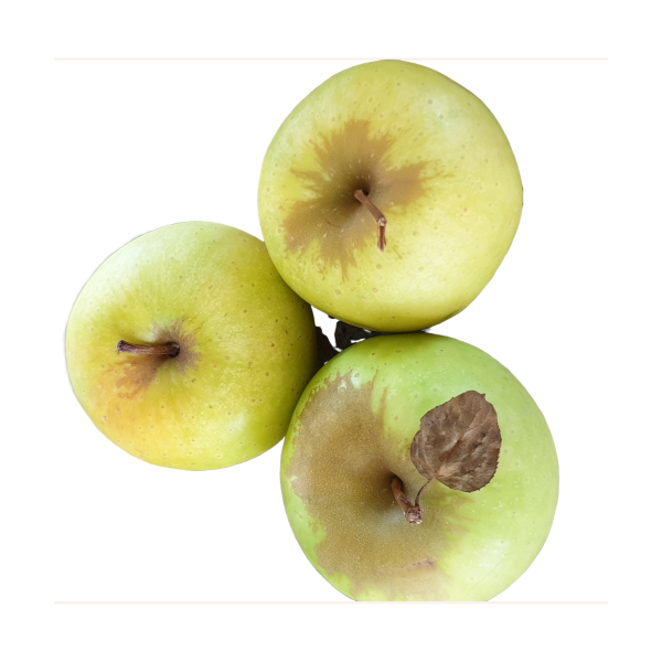 Apple 1kg - Granny Smith - Export quality