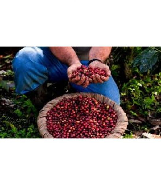 Costa Rica - Las Trojas - Single Origin Coffee