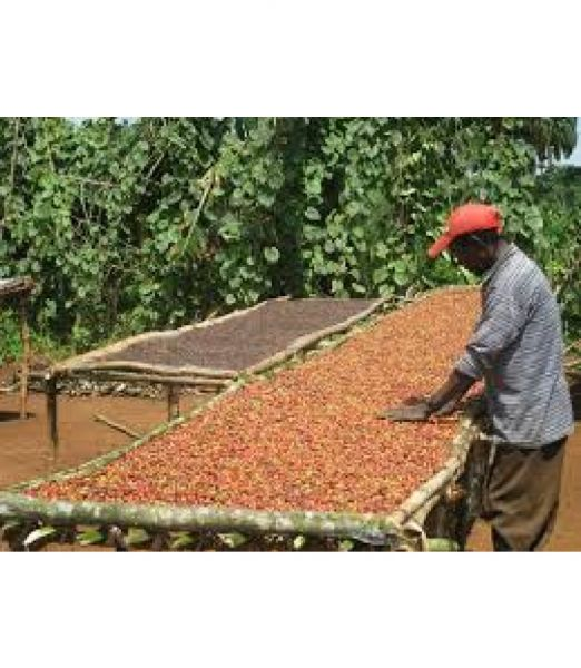 Ethiopia - Limu - Single Origin Coffee
