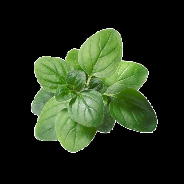 Oreganum 30g - ORGANIC Herbs